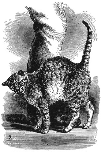 """Emotion in animals - A drawing of a cat by T. W. Wood in Charles Darwin's book The Expression of the Emotions in Man and Animals, described as acting """"in an affectionate frame of mind""""."""