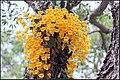 FLOWERS 4 (7237997730).jpg