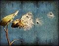 Fall Flight - Flickr - Muffet.jpg