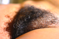 Female Pubic Hair With Some Grey Hair.png