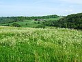 Field of cow parsley - geograph.org.uk - 442263.jpg