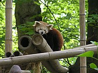 picture of Firefox