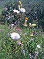Fleurs (4873898364).jpg
