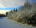 Flickr - Per Ola Wiberg ~ mostly away - winterscene.jpg