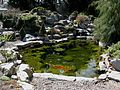 Flickr - brewbooks - Koi Pond.jpg