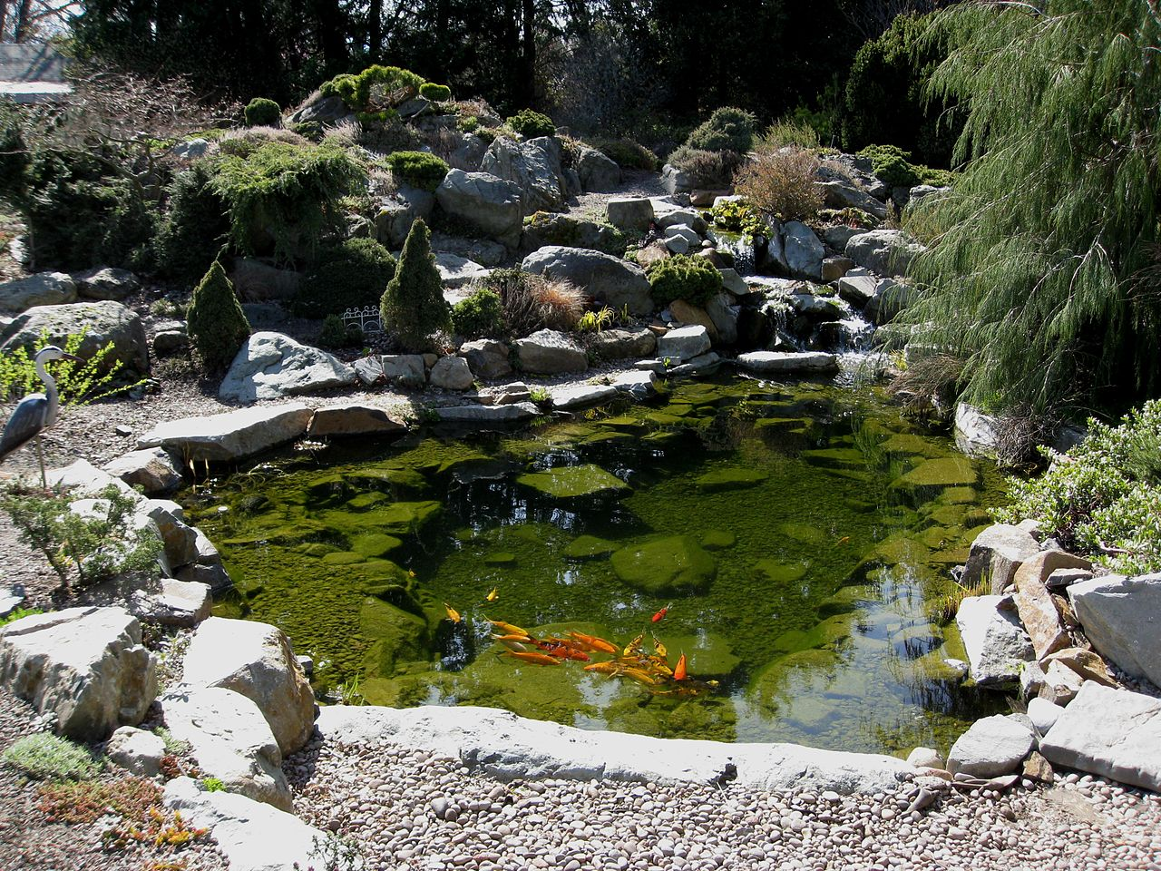 File flickr brewbooks koi wikimedia commons for Koi pond maintenance near me