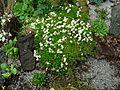 Flickr - brewbooks - Our Garden - May, 2008 (8).jpg