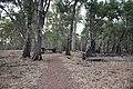 Flinders Ranges SA 5434, Australia - panoramio (91).jpg