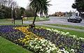 Floral Display-Southampton Hill - geograph.org.uk - 727867.jpg