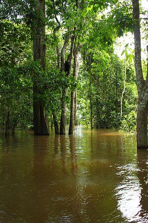 Jaú National Park - Image: Floresta Alagada Parque Nacional do Jaú