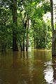 Floresta Alagada - Parque Nacional do Jaú.jpg