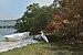 Florida white heron Longboat Key.jpg