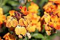 Flower 149 (16247129286).jpg