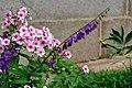 Flower 207 (32862611615).jpg