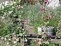 Flowers at San Juan Capistrano.jpg