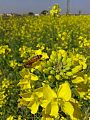 Flowers blossom in kalas.jpg