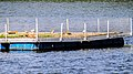 Flussseeschwalbe (17) (34864849772).jpg