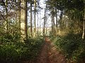 Footpath through Grove Coppice - 2 - geograph.org.uk - 1150477.jpg