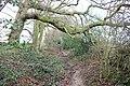Footpath towards Pembury - geograph.org.uk - 339386.jpg