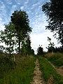 Forêt de Tournehem - panoramio - Jean Marc Gfp.jpg