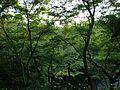 Forest in Kiyomizudera Temple.JPG