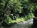 Forest near entrance of Sefa-Utaki.JPG