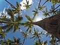 Forest of Palms (Unsplash).jpg