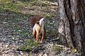Formby red squirrel forest 8.jpg