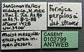 Formica perpilosa casent0102799 label 1.jpg