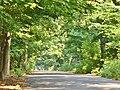 Forst Grunewald - Kronprinzessinnenweg (Grunewald Forest - Crown Princesses Way) - geo.hlipp.de - 41353.jpg