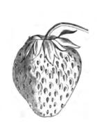 culture fraisier