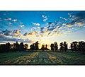 French Sunset Ii (10433407).jpeg