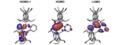 Frontier orbitals of π conjugated phosphasilene.tif