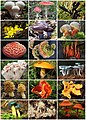 Fungi Diversity.jpg