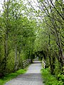 Galloping Goose trail near Glen Lake. INFO IN PANORAMIO DESCRIPTION - panoramio.jpg