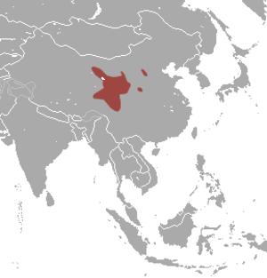 Gansu pika - Image: Gansu Pika area