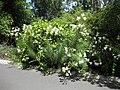 Gardenology.org-IMG 0060 rbgm10dec.jpg