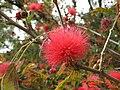 Gardenology.org-IMG 5042 hunt0904.jpg