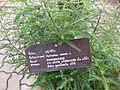 Gardenology.org-IMG 8036 qsbg11mar.jpg