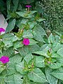 Gardens 17.jpg