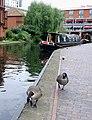 Geese near Gas Street Basin, Birmingham - geograph.org.uk - 1734080.jpg