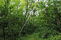 Gfp-wisconsin-new-glarius-woods-tree-falling-over-on-trail.jpg