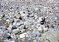 Goat Herder Stavropol Hammond Slides.jpg