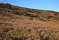 Golden evening light on Ruabon Mountain - geograph.org.uk - 1239231.jpg