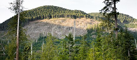 Clear cutting of old growth forests in Canada. Gordon River Clearcut.jpg