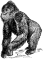 Gorilla (PSF).png