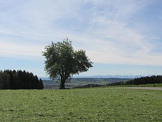 Battle of Wurzach