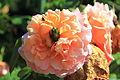Gradina Botanica iunie 2014 IMG 3798 02.JPG