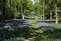 Grafton Wood - geograph.org.uk - 1127246.jpg