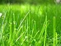 Grass closeup.JPG